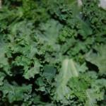 DSC 6917 150x150 Pick of the Week: Kale
