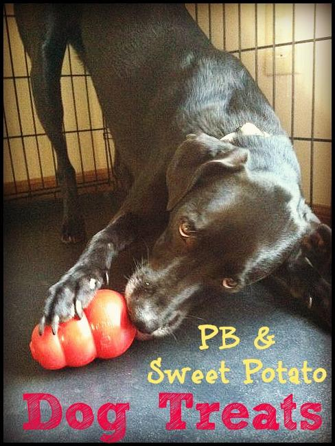 dog4 Peanut Butter Sweet Potato Dog Treats