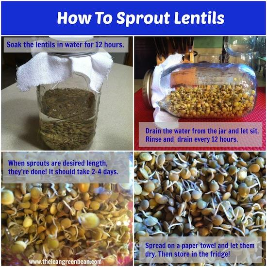 how to sprout lentils 1 How To Sprout Lentils