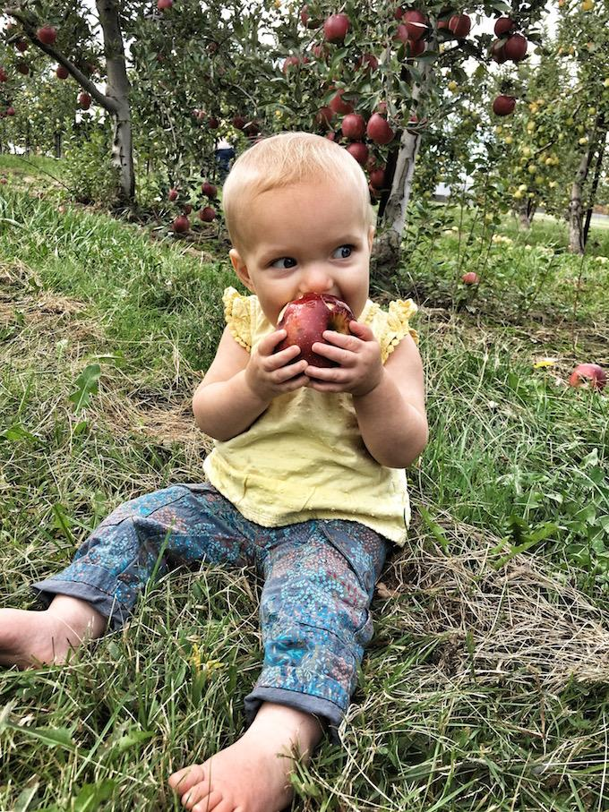one year old apple orchard