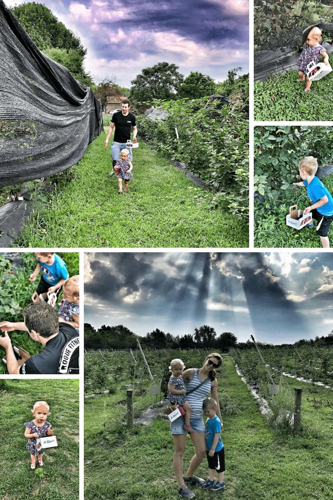 blackberry picking butler county